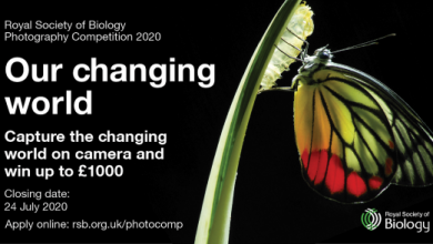Photo of مسابقۀ عکاسی انجمن سلطنتی زیست شناسی ۲۰۲۰