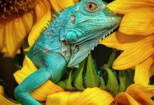 Photo of عکسهای برتر حیات وحش در رقابت عکاسی آگورا