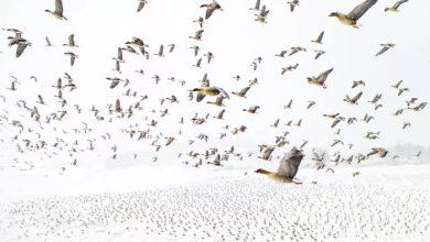 غازهای پا صورتی برنده جایزه عکاسی با پهپاد سال ۲۰۲۱ | مجله اثرهنری، بخش هنری، خبری و تحلیلی مجموعه اثرهنری | مجله اثر هنری ـ «اثرگذارتر باشید»